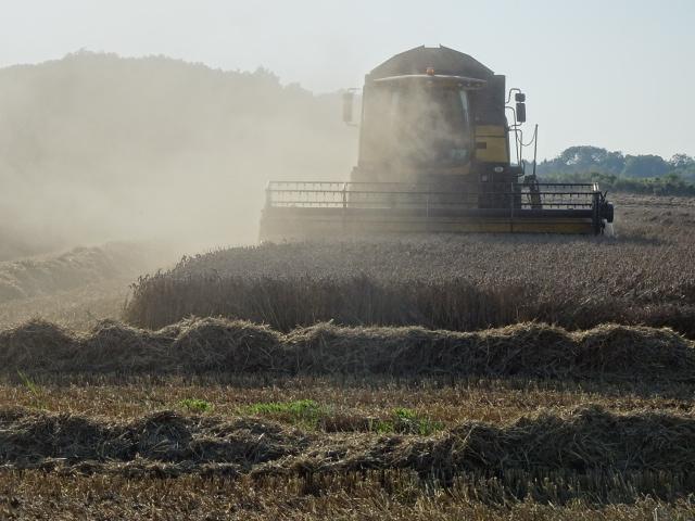 Denise Plummer's Farming Column