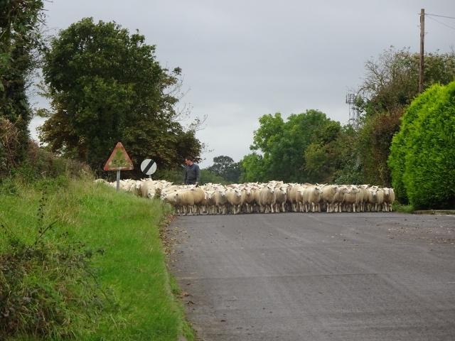 Denise Plummer's Farming Diary