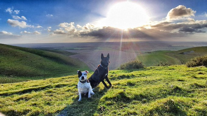 Did you know that Boris was admiring the view in the Pewsey Vale yesterday?
