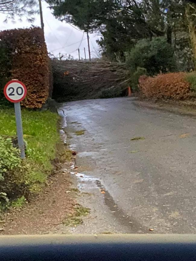This tree in Great Cheverell was felled by storm Ciara