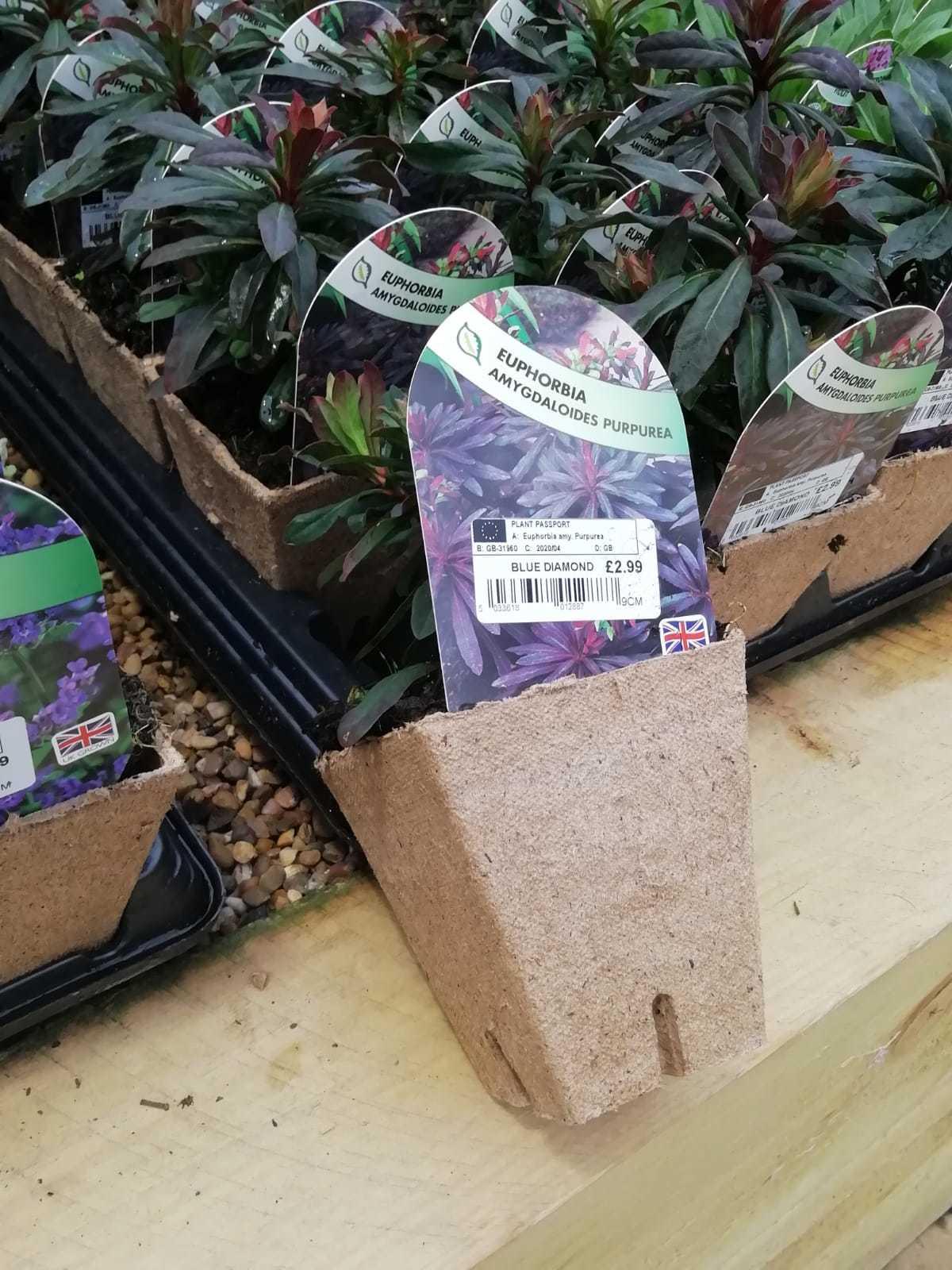 Biodegradable pots help reduce plastic waste