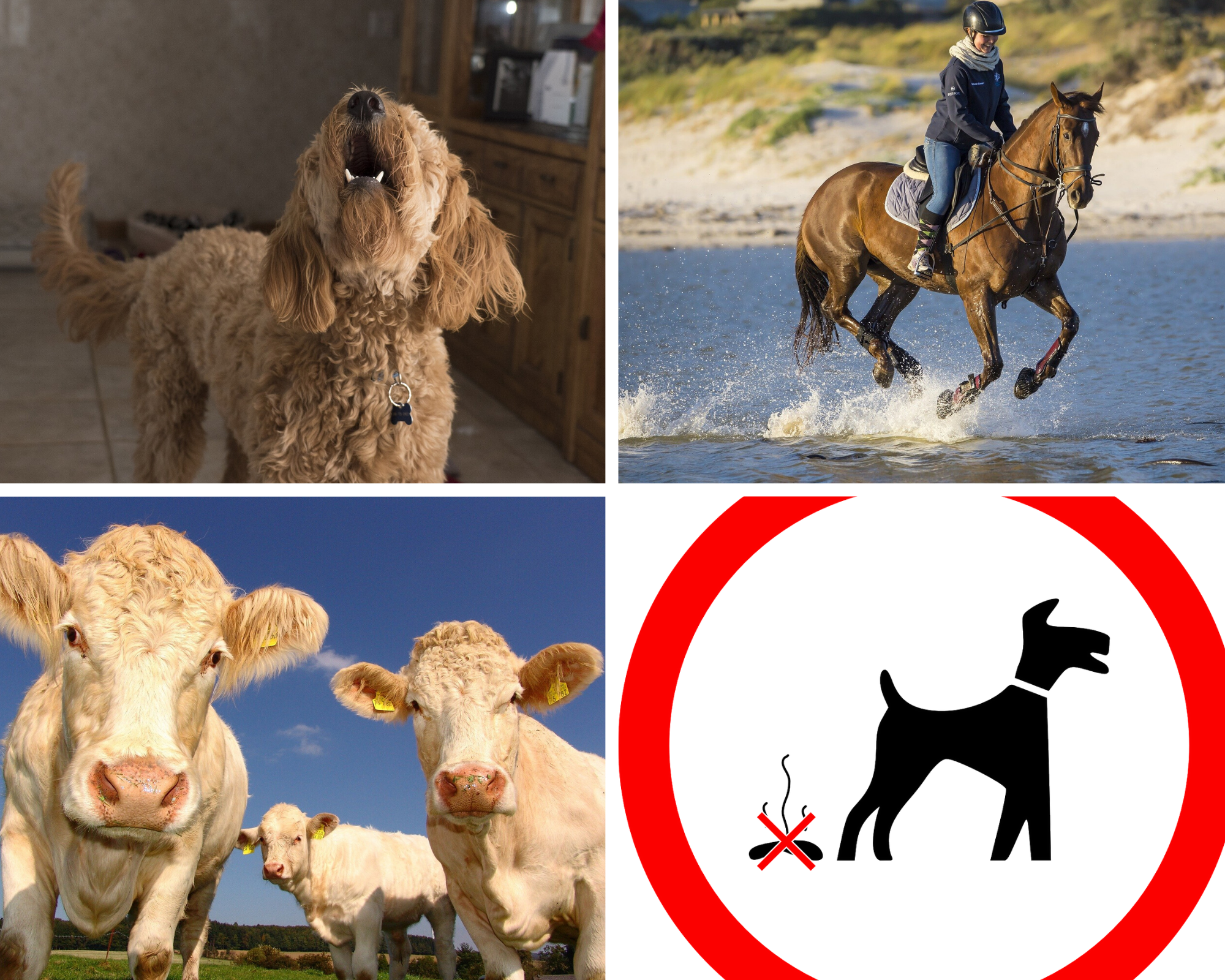 The nine pet laws you probably didn't know existed