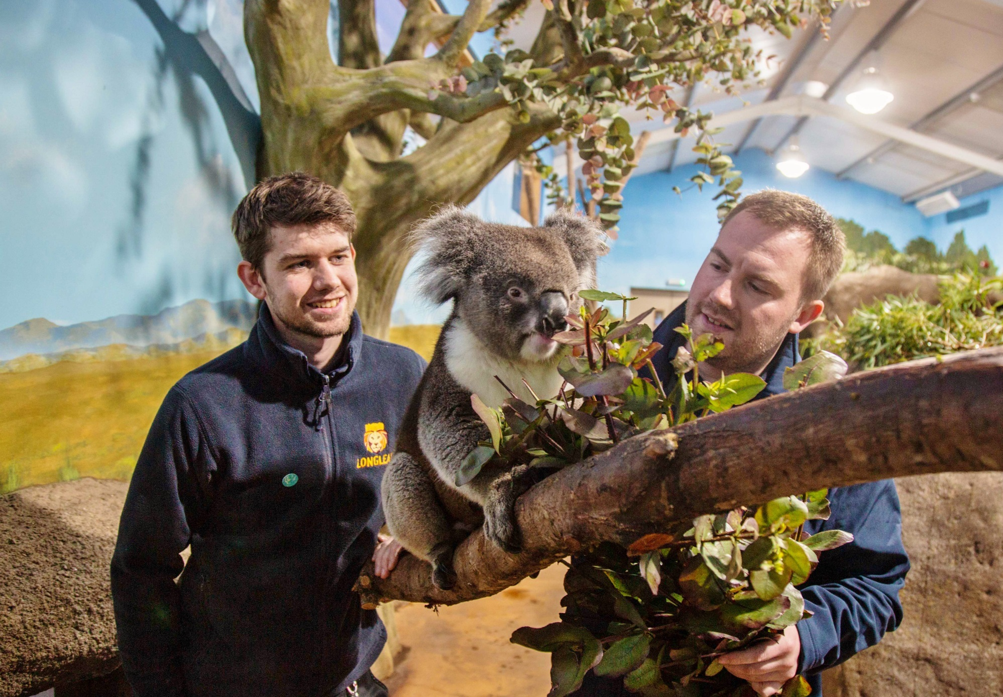 Australian bushfire appeal song is a video hit