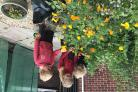 Children from the Key Worker Club at Chilton Foliat School tending to the flowers