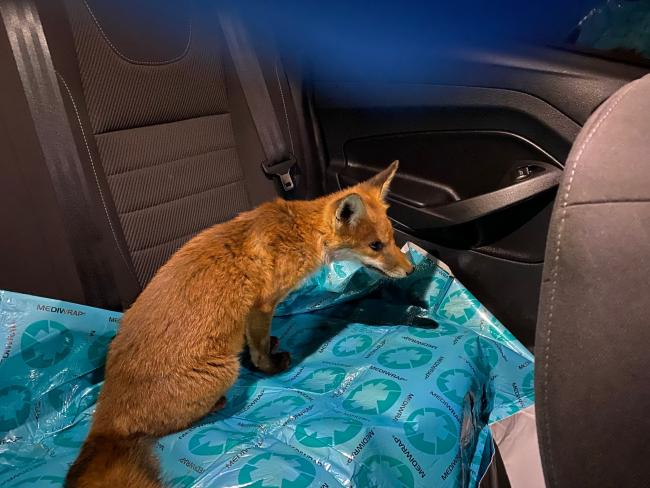 Fox given a ride in police car