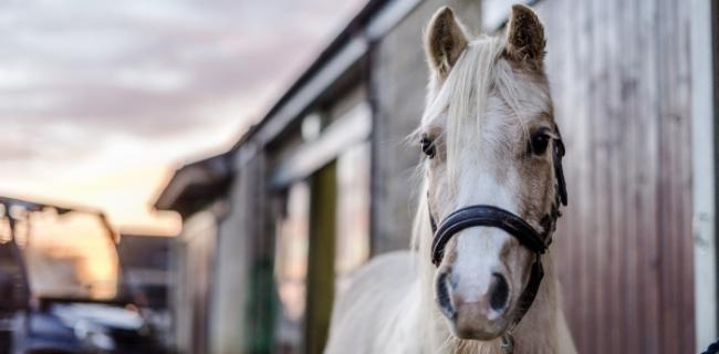 Warning about thefts from stables