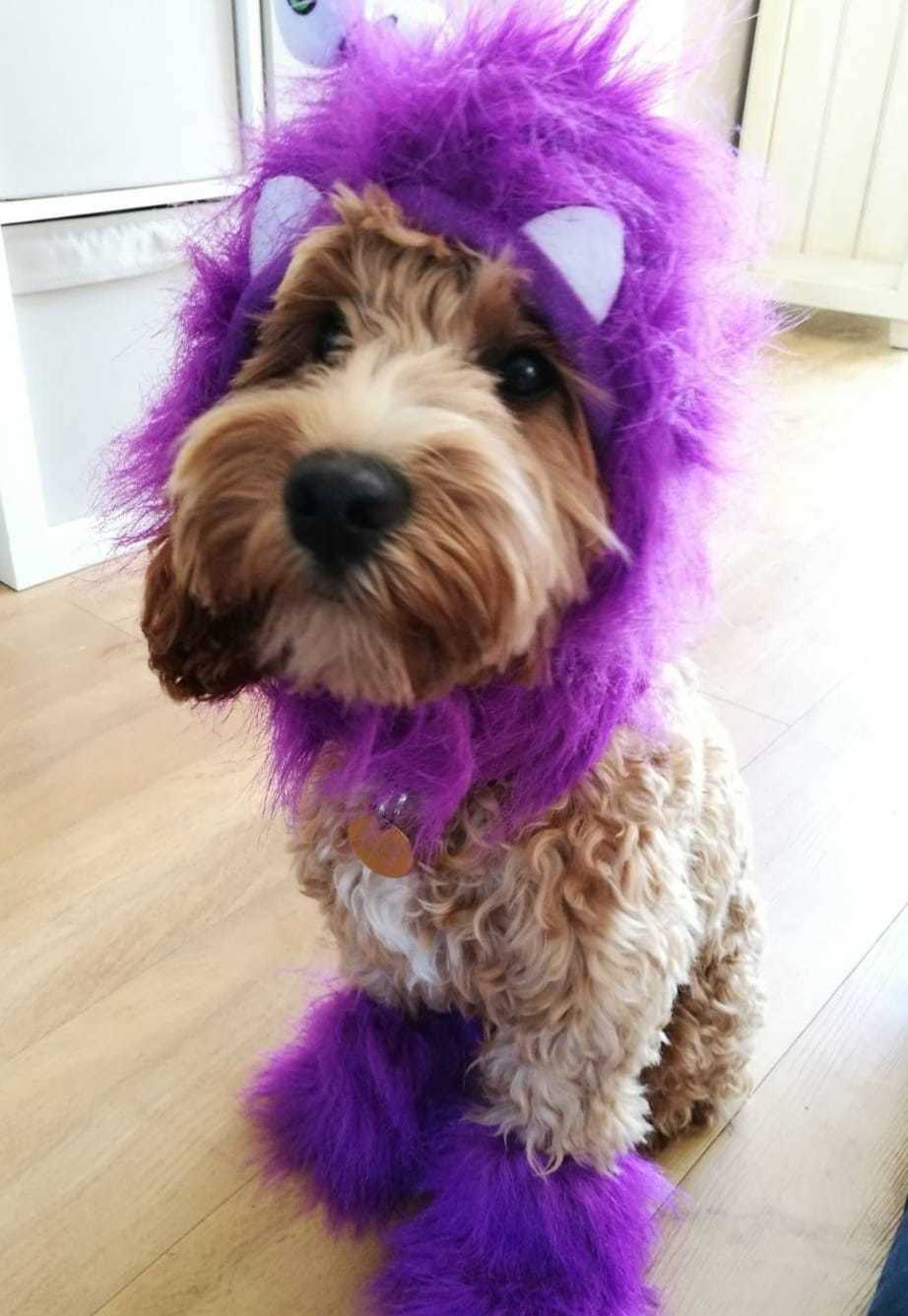 Check out these pawsomely adorable Halloween pets