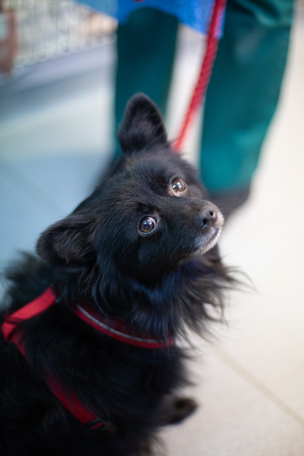 Charity's fears over a rise in abandoned pets during lockdown