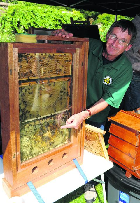 Beekeeper Roger Froud with the observation hive