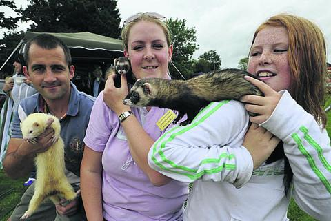 Kirsty Whiffen, centre, and Ben Rawlings  of Trowbridge with their ferrets and ferret racing helper Shannon Hartley