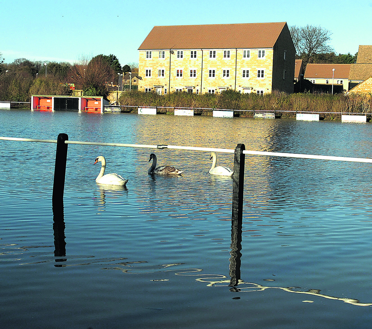Swans go sailing by on Malmesbury Vics' flooded pitch on Christmas Eve