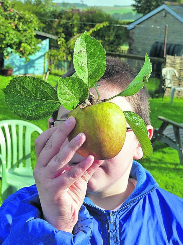 Wiltshire Times: Admiring the fruit