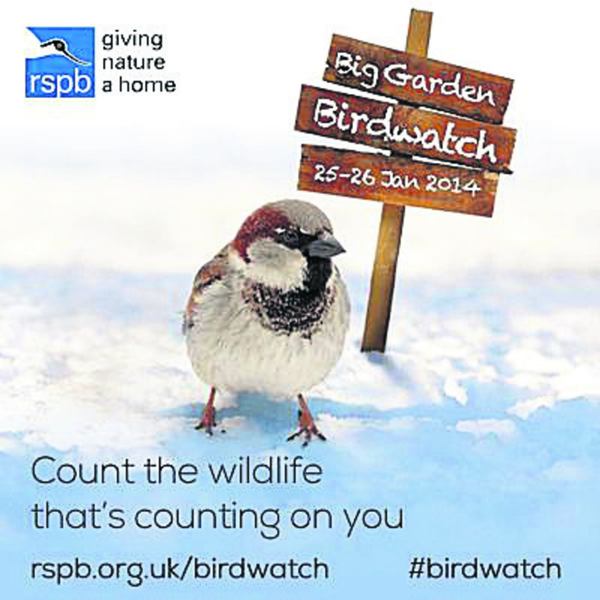 Over 6,000 people took part in this year's RSPB Big Garden Birdwatch in Wiltshire