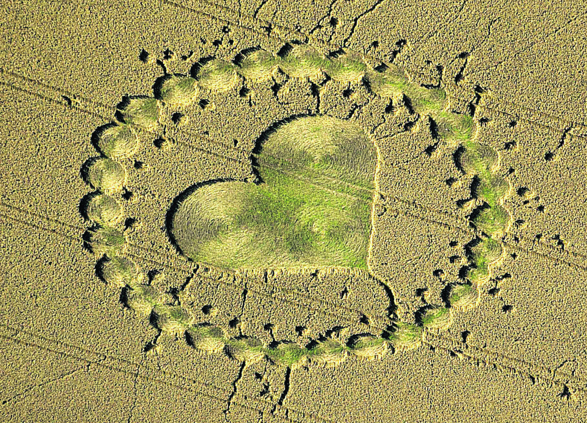 Crop Circle Information Centre moves to Wiltshire Museum in Devizes