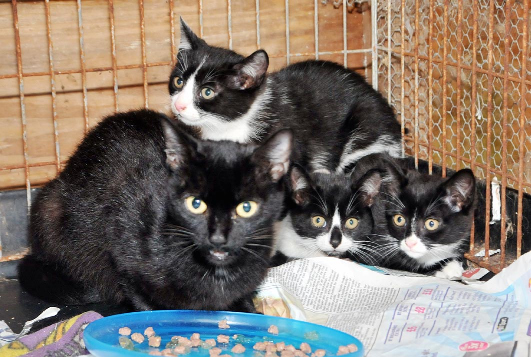 Melksham charity seeks foster carers for cats
