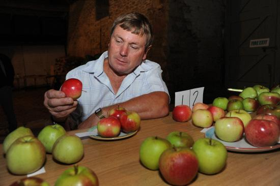 Neville Day takes a close look at a shiny apple as he judges the apple entries at the  show