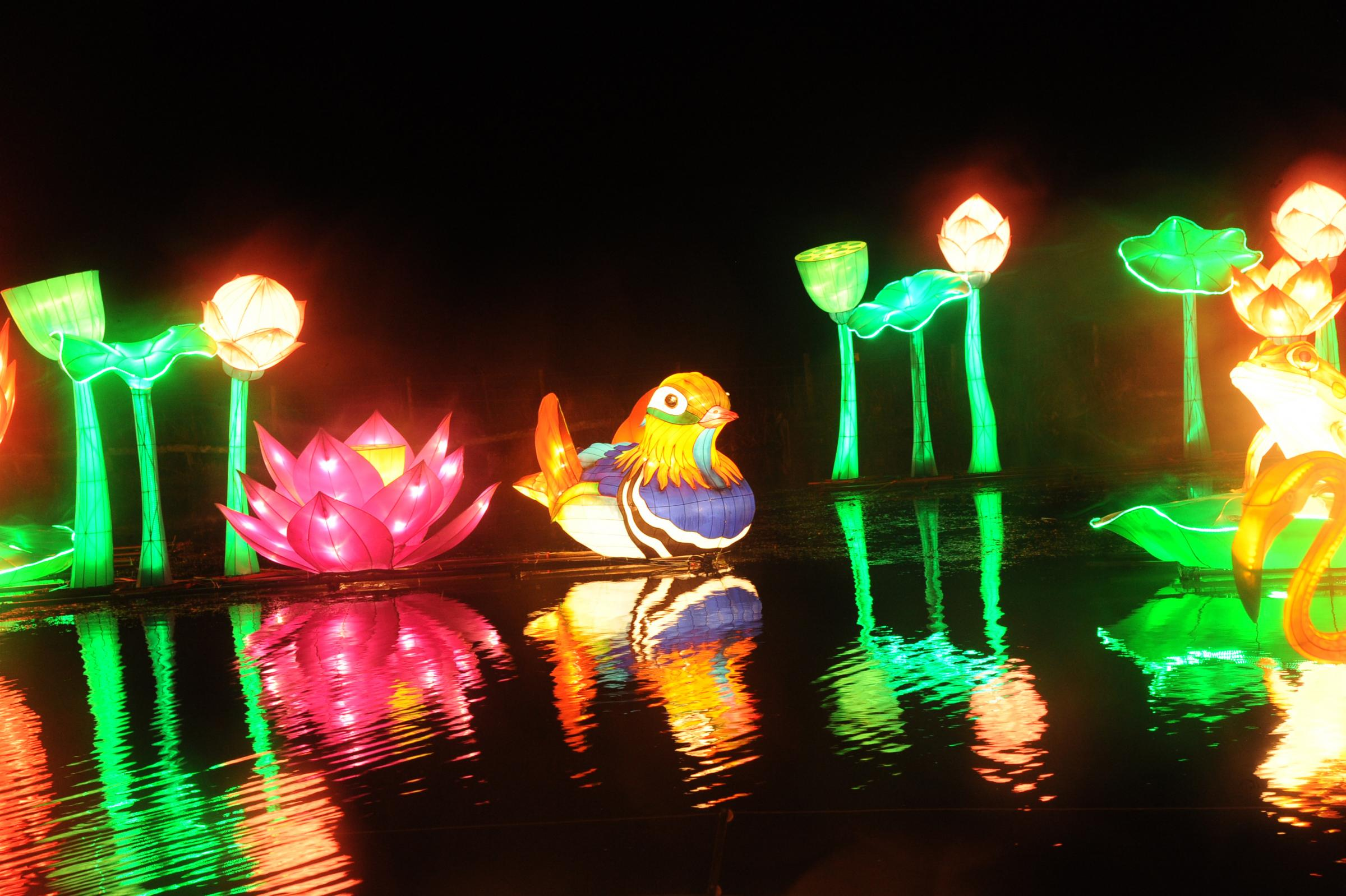 Picture Gallery-  Longleat's Festival of Light