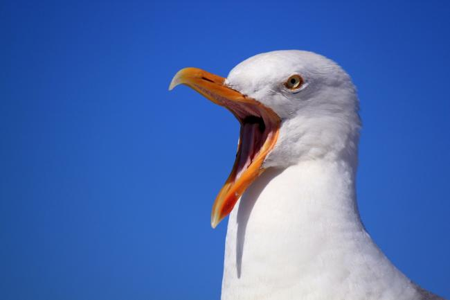 The noise from feeding seagulls has upset neighbours in part of Trowbridge