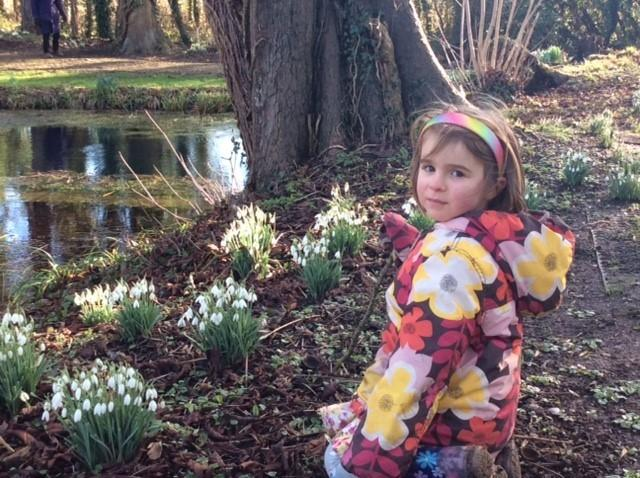 Molly Rogers, 4, enjoys the snowdrops at Great Chalfield Manor during the open day for Dorothy House Hospice