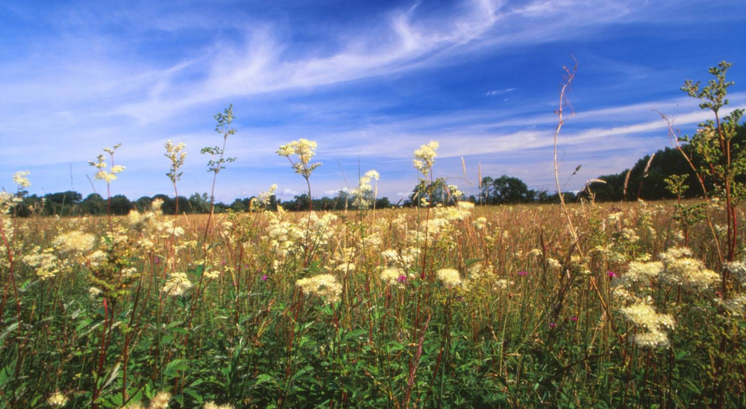 Trust calls on MPs to help save wildlife forever