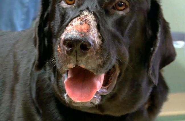 Alabama Rot strikes in Wiltshire as dog dies from the disease